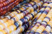 Dekorativa majskolvar — Stockfoto