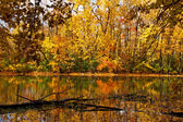 Fall full of colors forest — Stock Photo