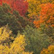 Fall colours — Stockfoto #38304451