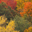 Stock Photo: Fall colours