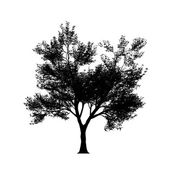 Tree silouette in high resolution — Vecteur