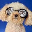 Hypnotic Dog — Stock Photo #13408668