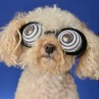 Stock Photo: Hypnotic Dog