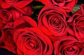 Amor rosa — Foto de Stock