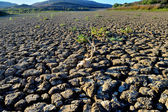 Terre aride — Photo