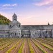 Abbaye de Senanque in Provence before sunset — Stock Photo
