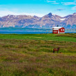 Iceland red house in the meadow with a horse, mountain background — Stok fotoğraf