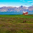 Iceland red house in the meadow with a horse, mountain background — Foto de Stock