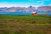 Iceland red house in the meadow with a horse, mountain background — Stock Photo