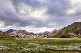 Landmannalaugar mountains in Iceland, landscape view with flowers meadow — Stok fotoğraf