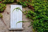 Chiusa la finestra in legno e foglie d'uva — Foto Stock