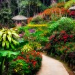 Landscaped colorful and peaceful flower garden in blossom — Stok fotoğraf