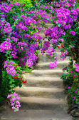 Beautiful colorful blossom flowers and garden stairway — Stock Photo