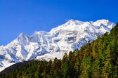 Himalayas mountain peak view of Annapurna II with trees in foreg — Stock Photo