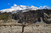 Dry tree and Himalayas mountain range — Stock Photo