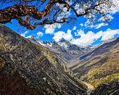 Albero e himalaya monti picco — Foto Stock