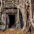 Ancient stone temple door and tree roots — Stock Photo