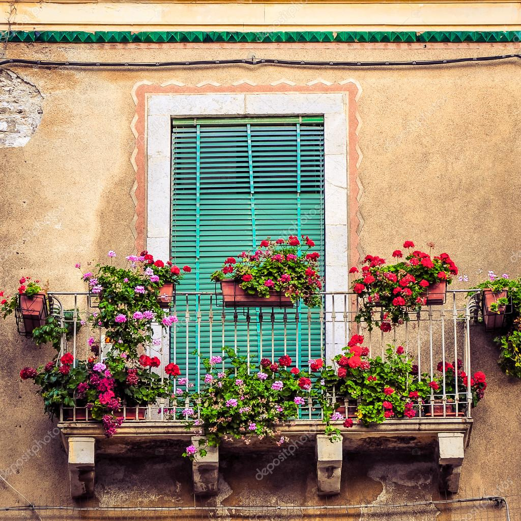 Южное окно цветы фото