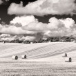 Monochrome wheat field with straw bales and cloudy sky — Stock Photo
