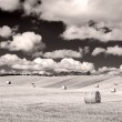 Monochrome curvy barley field with straw bales and cloudy sky — Stock Photo