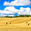 Wheat field with straw bales and blue cloudy sky — Stock Photo