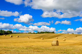 Curvy barley field with straw bales and blue cloudy sky — Stock Photo