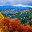 Stock Photo: Landscape view of colorful autumn foliage forrest at cloudy day