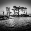 Dramatic monochrome view of trees in the lake — Stock Photo #36204473