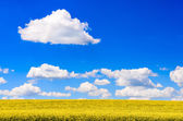 Field of yellow flowers with blue sky and white clouds — Stock Photo