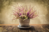 Detail of nice heather flower in pot, vintage style — Stock Photo