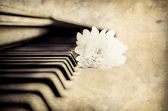 Close-up detail of piano keyboard and flower in monochrome — Stock Photo