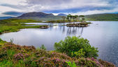 Landscape view of trees in a lake at Scottish highlands — Foto de Stock