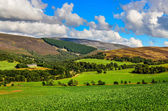 Scenic landscape view of Scottish highlands meadows — Stock Photo