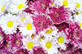 Bouquet of colorful ox-eye-daisy and chrysanthemum flowers — Stock Photo