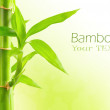 Bamboo background with copy space - Foto Stock