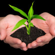 Plant in hands - Foto Stock