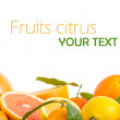 Fruits citrus - Stockfoto