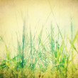 Vintage nature background - Foto de Stock