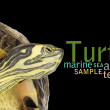 Texture of with turtle - Stock Photo