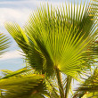 Royalty-Free Stock Photo: Palm leaves in backlight