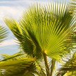 Palm leaves in backlight - Stock Photo