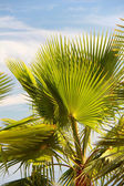 Palm leaves in backlight — Stock Photo