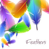 Background with colorful feathers — Stock Vector
