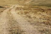 Wheat Field after Harvest — Foto de Stock