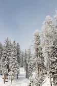 Bosque hermoso en las montañas de invierno — Foto de Stock