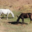 Andalusian horses on pasture — Stock Photo #17617673