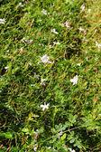 Abstrait fleurs blanches — Photo