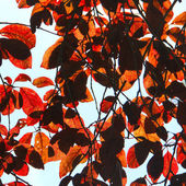 Red Leaf Background — Stock Photo