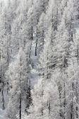 Beautiful forest in winter mountains — Stok fotoğraf