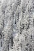 Beautiful forest in winter mountains — Fotografia Stock